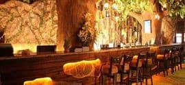 Rainforest Resto Bar Viman Nagar